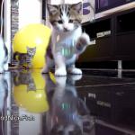 にゃんともメルヘン♪たくさんの子猫たちが夢中で見つめる丸い物体はなーんだ?