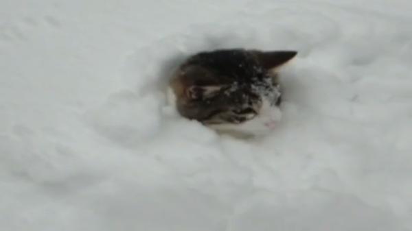 寒いのなんて平気だにゃん♪雪の中ではしゃぐ猫ちゃんたちがキャラ違い?(笑)