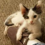 『ソファの下から出ておいで』シャイで臆病な子猫を待つ家族
