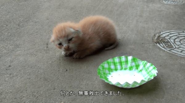 壁の中に…子猫!?尊い命を救うための大救出劇がこちら!!