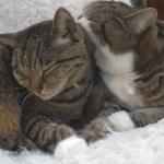 ゆっくりおやすみ♡はなを寝かしつけるまる&添い寝するまるが可愛い♡