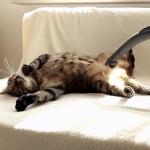 リラックスしすぎwww掃除機が大好きすぎる猫ちゃん