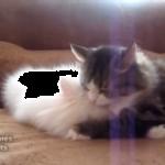 【うさぎと猫】二匹の天使たち♪仲良しすぎるスキンシップがもうたまらないっ♡
