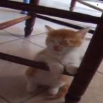うぅ…眠くなんてないにゃ~椅子につかまって睡魔と戦う子猫ちゃん♡