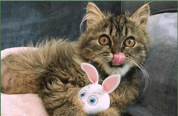 『子猫を救いたい』エジプトからアメリカへ海を渡った想い