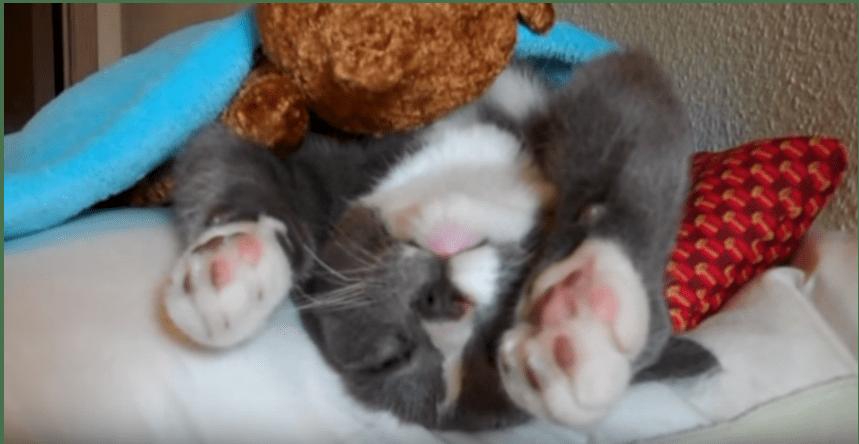 寝るときはいつもこれだよ♡ボクの毛布とボクの枕とお気に入りのテディベア