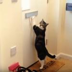 日々【戦う】猫たちいろいろ♡侵入者は許さニャいのだっ!
