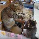 父ちゃん遊んで♪遊んで♪遊んで♪やり過ぎた息子を立ち上がって叱る父猫
