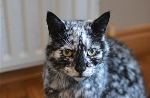 ★神秘的な模様は黒猫からのミラクルチェンジ☆19歳の猫