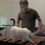 集中できない練習に頭を抱える飼い主さん♪ビブラフォンを闊歩する迷惑な猫