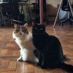 イギリス発『仕事するにゃん!』会社に雇用された2匹の猫