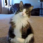 『2本足で立てば問題ないさ』前脚が不自由な猫のポジティブライフ