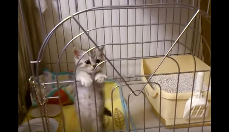 飼い主さんが目撃した驚愕の事実!子猫の脱走の瞬間☆