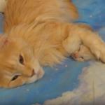 『こんな時間に迷惑なのよね』眠っているわが子の耳をふさぐ母猫