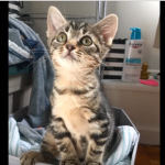 生きようとする意志が生んだ奇跡【感動】サウスブロンクスで助けられた子猫