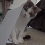 白い紙と猫♪床に置かれた紙を発見した猫ちゃんの取った行動とは?