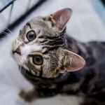 命の危機も下半身麻痺も乗り越える【奇跡】の子猫