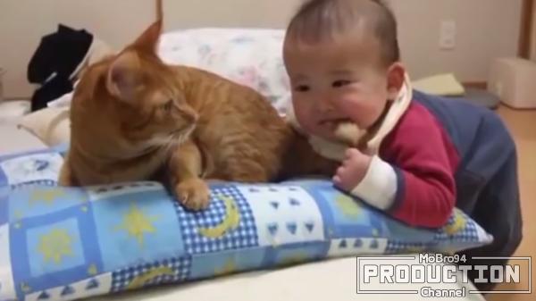 赤ちゃん「☆〇!?♡♡!!」猫「しょうがないなぁ…」赤ちゃんと猫の触れ合い♡