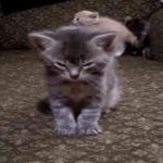 周りがうるさくても寝落ち…(笑)眠くて眠くて仕方ない子猫ちゃん