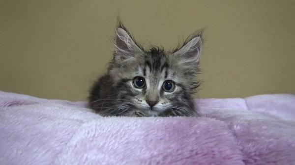 動くカーペットで遊ぶヤンチャな子猫☆しかし、カーペットの下には別の猫ちゃんが…