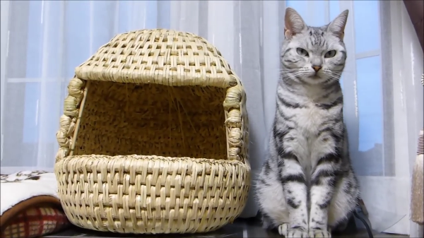 ☆お誕生日サプライズ☆寝ていた猫ちゃんの横にこっそりプレゼントを置いてみた結果!!
