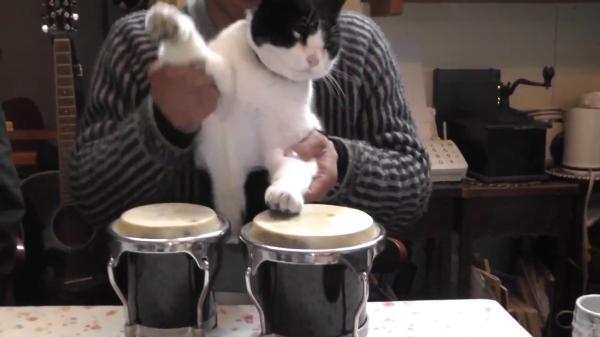 太鼓を叩かされてる感満載の猫ちゃんがおもしろ可愛い☆笑顔に溢れたかわいい演奏スタート♪