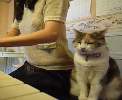 「良きかにゃ〜」ママのピアノにうっとり♪演奏が終わるまで隣で聴き入る猫ちゃん