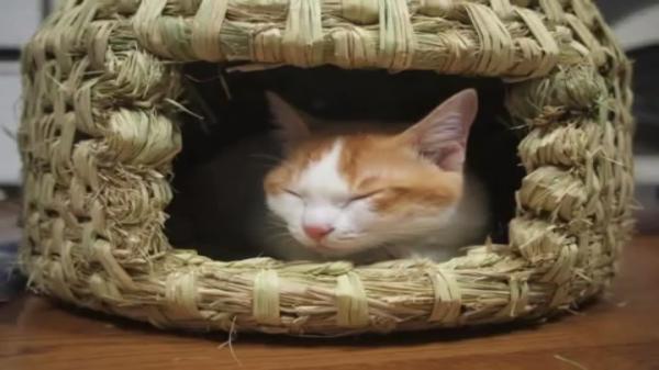 藁の束にズザーー!!藁で猫ちぐらを作る飼い主さんの横で「藁だ!藁だにゃ〜♪」とテンションMAXな猫ちゃんが笑えるw