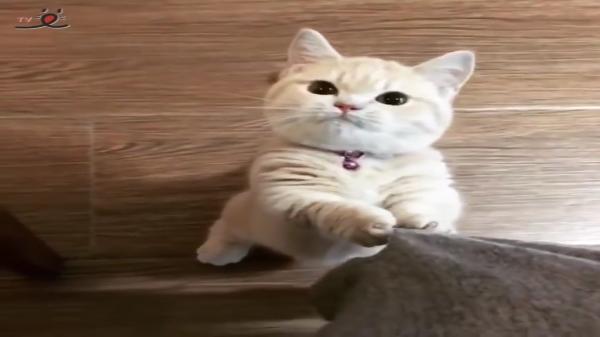 そんな目で見つめられたら…♡キラッキラした目で「ごは〜ん♪」とおねだりする猫ちゃんがか…かわいすぎる♡