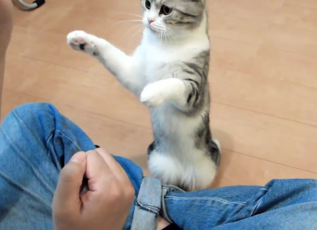 犬だけじゃなかった!!「おすわり」「お手」など芸をする猫ちゃんがいた!!!
