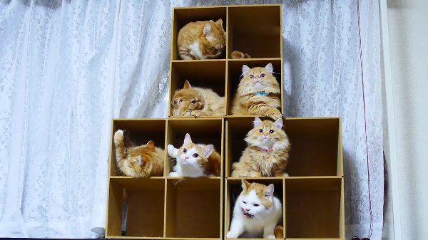 大家族、総勢8匹!!マンチカン一家の記念撮影大作戦☆自由奔放な猫ちゃんの撮影はできたのか!?