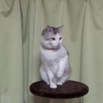 バッチコーイ!!猫の千本ノック!?余裕の表情で打ちまくる猫ちゃん☆だが、しかし…衝撃の結末ww