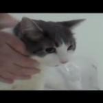お風呂が怖い猫ちゃん、その悲痛な訴えはまるで人間の赤ちゃん(笑)
