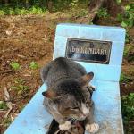 『心を開いて』飼い主の死を受け入れられない猫へ