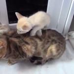 子猫の兄弟に混じっているのは…フェネックの赤ちゃん!?