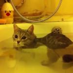 ♨好き?嫌い?お風呂に入る猫ちゃんたちの反応♪