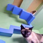 救助された猫たちが暮らす家が凄すぎる!ネコインワンダーランドだにゃ!