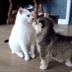 「はじめまして・・・(どきどき)」猫と犬のはじめましてシーン集!これから仲良くね♪