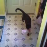 「お手紙くださいにゃ♪」郵便屋さんを待つ猫たちがかわいい!猫の郵便屋さんも!