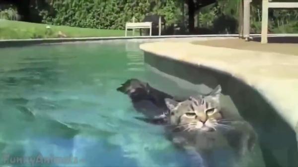「お水だーいすき♡」お風呂やプール、お水が大好きな猫ちゃん!
