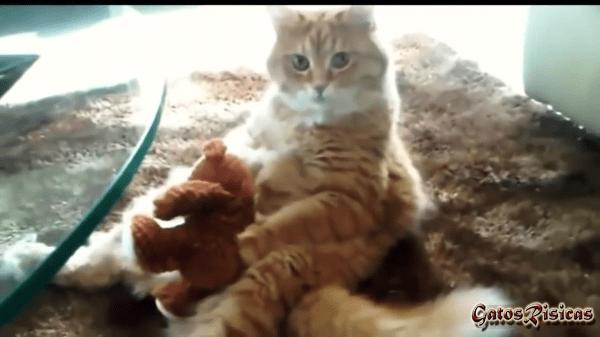 「大好きなお友達なの♡」お気に入りのぬいぐるみを離さない猫たちがかわいい~!!