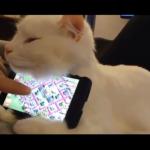 【癒し】アホかわいい猫たち!思わず「ぷぷぷwww」でストレス解消!