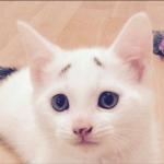 『安心してください、僕は困っていません』困り顔がキュートな猫ちゃん♡