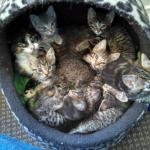 『子猫を探せ!』亡くなった母猫が残した生後間もない子猫の命