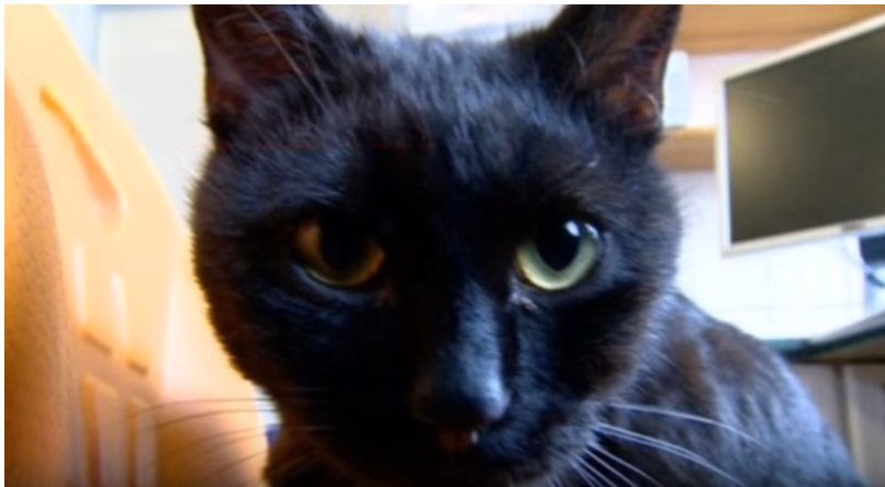 【感動】助けられた命をみんなのために・・・動物病院の看護師猫