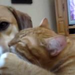 「わんわん大好きにゃ♡」犬とラブラブな猫たちの様子♡