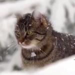「こたつ・・・?そんにゃもん知るかっ!」全力で雪を楽しんじゃう猫がカワイイ!!