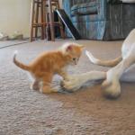 仲良しな二匹♪一緒に住む大きいワンちゃんの大きいお手てが不思議でしょうがない子猫ちゃん♡