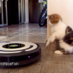 【猫たちのタンゴ】床用お掃除ロボットを相手にキレが抜群のダンスを踊る猫ちゃんたち。