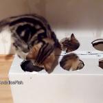 モグラたたきならぬネコたたき?穴の開いたダンボールで遊ぶ子猫ちゃんたちが無邪気でたまらないっ♡
